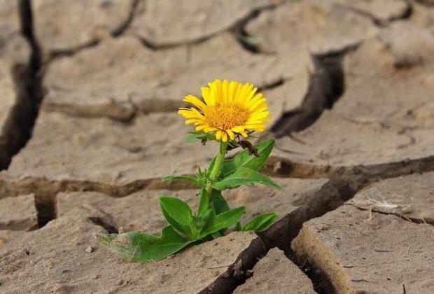 Flor nasce em terreno agreste